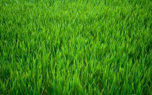aboutusgreen
